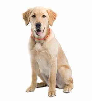 Collar perro LED